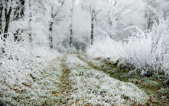 32 best first frOst images on Pinterest | Winter, Winter ...