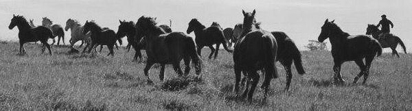Próximo tatuaje :) en el antebrazo derecho. Foto corriendo los caballos, a caballo, en Animales Sin Hogar. Foto de Laura