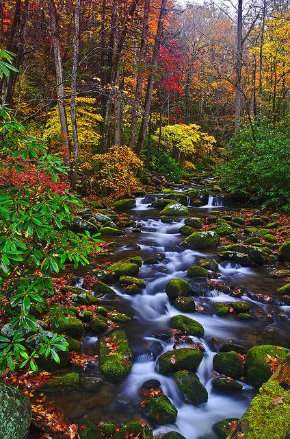 ~~Roaring Fork River in Great Smoky Mountain National Park ~ Autumn, Gatlinburg, Tennessee by photogg19~~