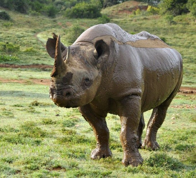 In Honour of World Rhino Day http://www.gondwanagr.co.za/in-honour-of-world-rhino-day/