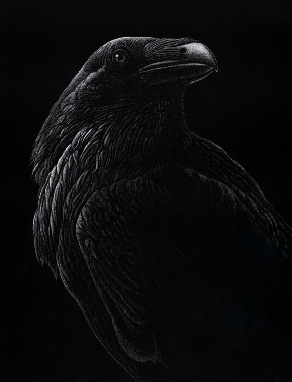 Stunning Raven Scratchboard - Nathan H Perry