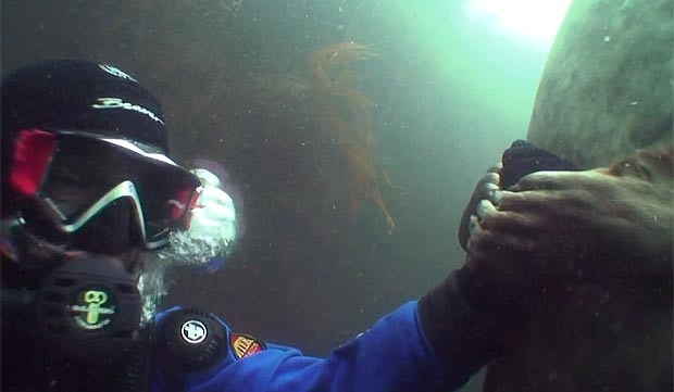 GREY seal pup holds hands with British diver Ben Burville in a heartwarming moment captured on video, proving that we're not that different after all
