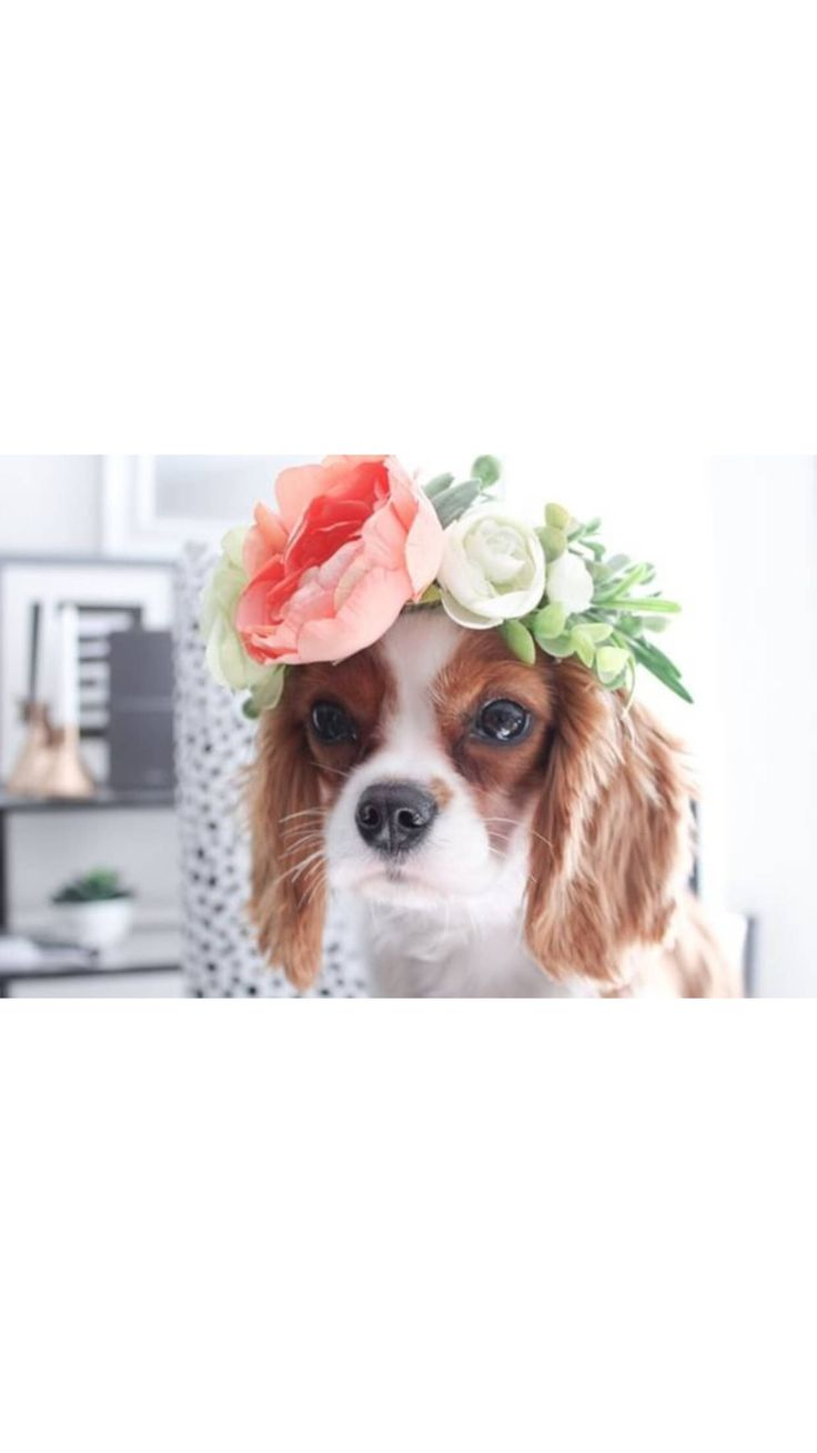 Excited to share the latest addition to my #etsy shop: Coral Flower Crown, Dog Floral crown, dog flower crown, boho dog wedding, puppy flower crown, photo shoot prop, pet photo prop,  peony #pets #wedding #dogflowercrown #weddingdog #whiteflowercrown #bohodog #puppyphotoprop #dogwedding #dogflowergirl