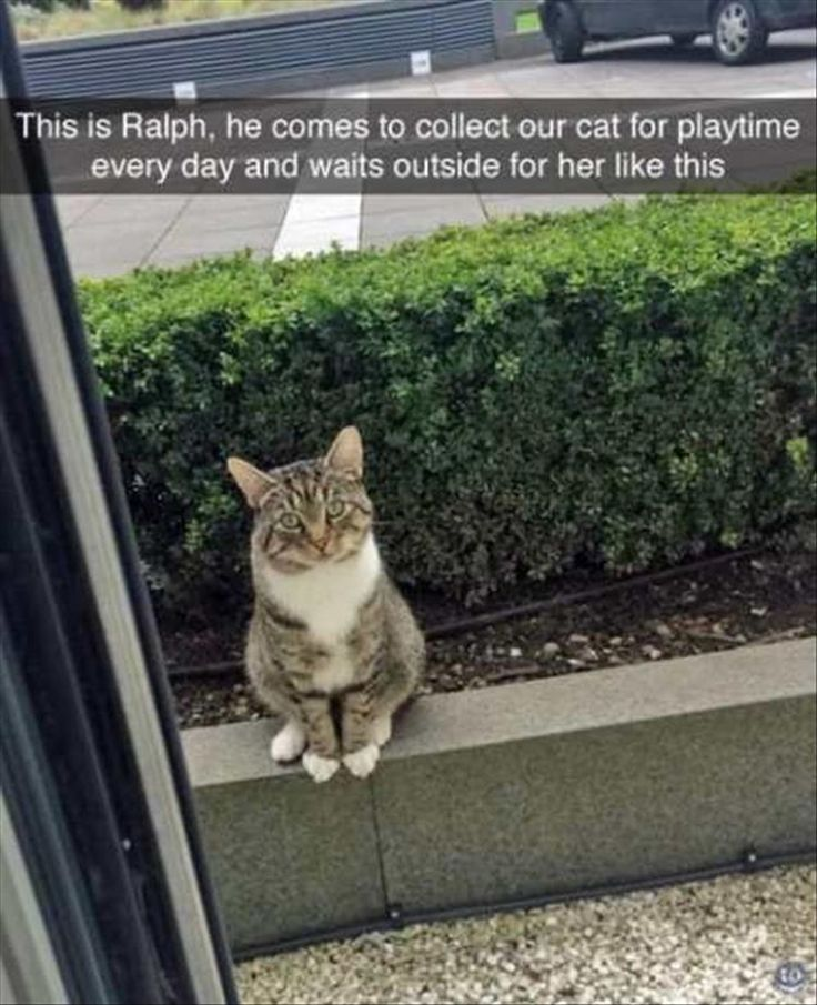 This is Ralph. -- Might not be playtime. He might be joining a clan and they're trying to get him to run away like rusty/firestar