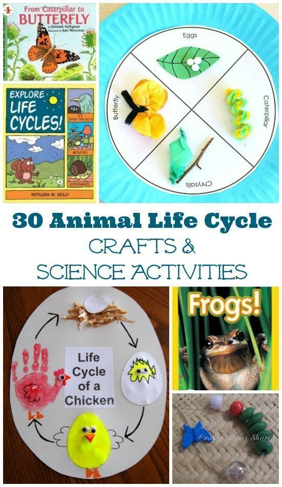 Explore animal life cycles - hands-on science projects with these books, crafts and  activities!