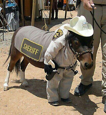 """Sheriff Mini Horse~ HAVE A BLESSED & FUNNY DAY~ """"OLD FASHION VINTAGE FARMER'S WIFE"""" ~~"""