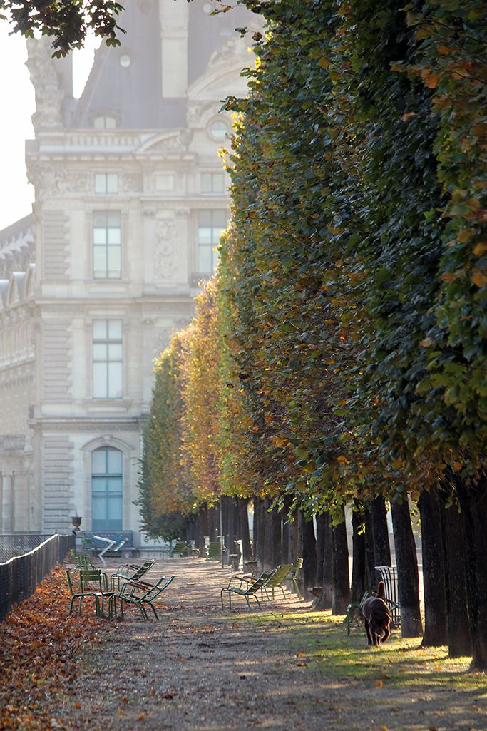 Paris tulleries in the Autumn: Paris tulleries in the Autumn