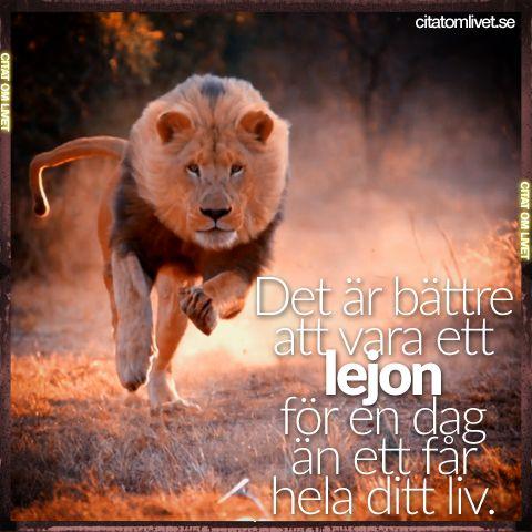 Det är bättre att vara ett lejon för en dag än ett får hela ditt liv.  Vi blir grymt glada om du gillar eller delar det här citatet om du tycker om det ❤️ Följ oss för fler citat ❤️  #lejon #får #varamodig #modig #mod #stark #unik #taförsig #livet #attvåga #våga #ståupp