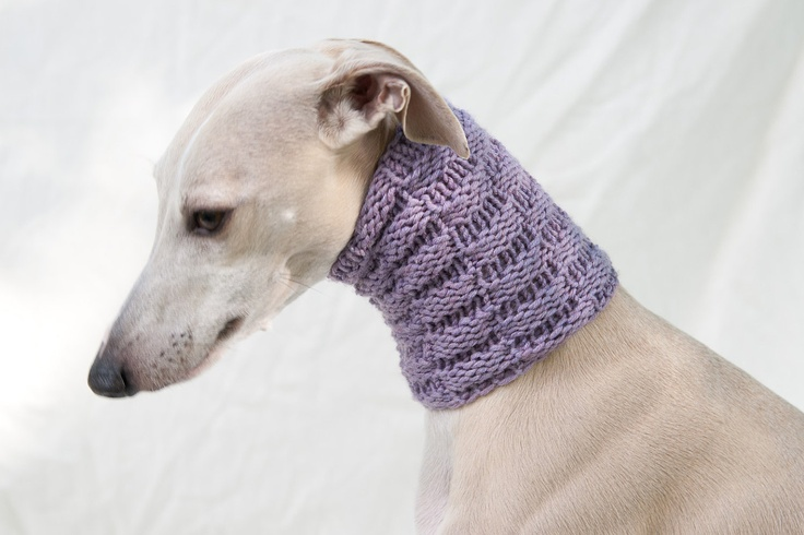 ~ Whippet ~ in super snood! Critters Pinterest Lilacs, Snood and Scarfs