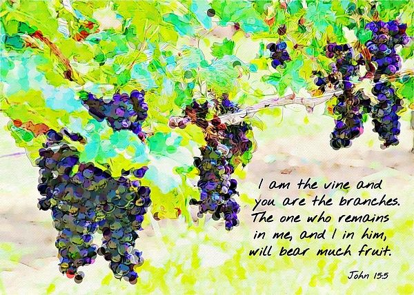 I Am The Vine And You Are The Branches By Cathy Lindsey Vines Grape Trellis Artist
