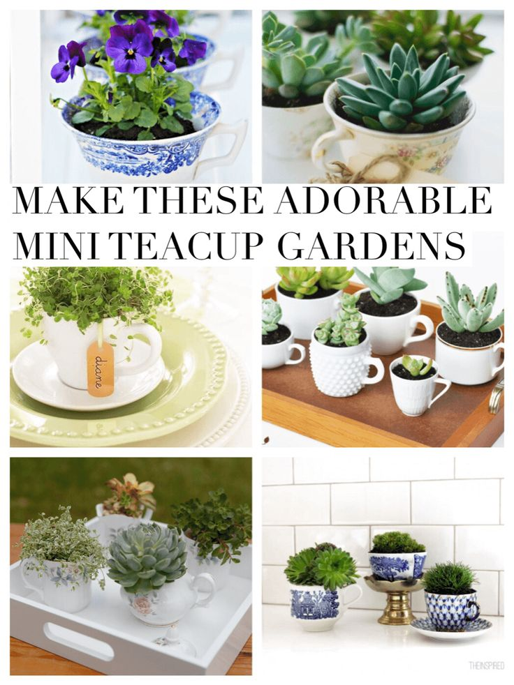 Aren't these just dreamy? Nothing says magic like a little teacup full of plants. Make these Adorable Mini Teacup Gardens collected here at Pop Shop America.