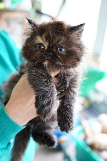 kitten ♥