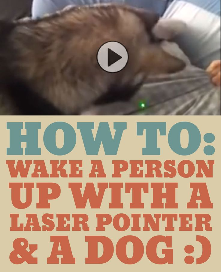 HOW TO: Wake a person with a laser pointer and a dog!