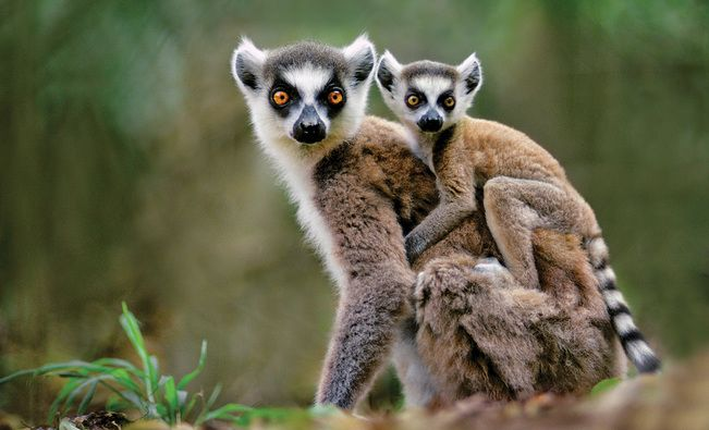 Madagascar Wildlife Travel & Snorkeling Tour | National Geographic Expeditions