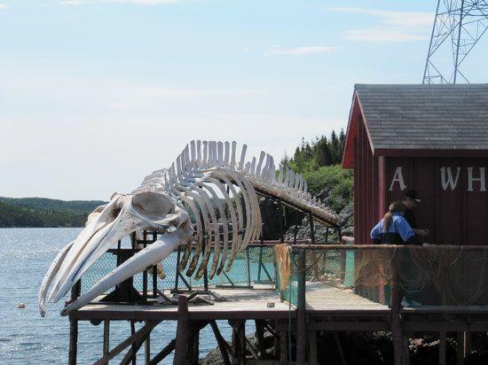 Prime Berth Fishing Museum; Twillingate, Newfoundland