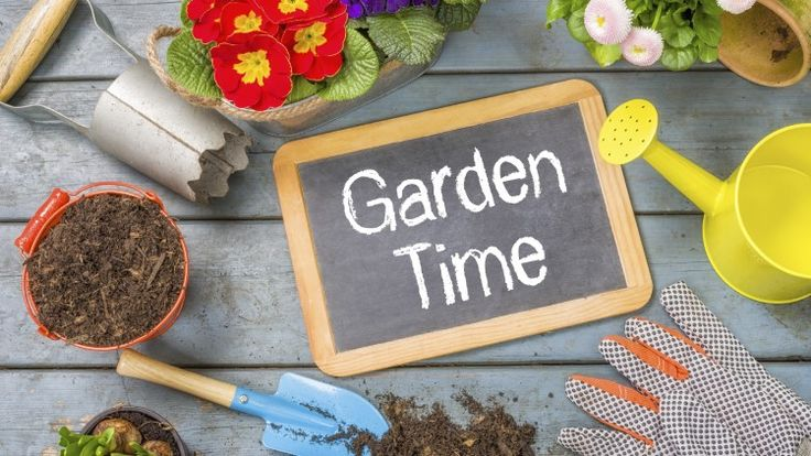 Permalink to 5 Savvy Ways To Beautify Your Garden