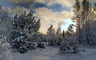 Nice Winter Trees Snowy Field wallpapers and stock photos