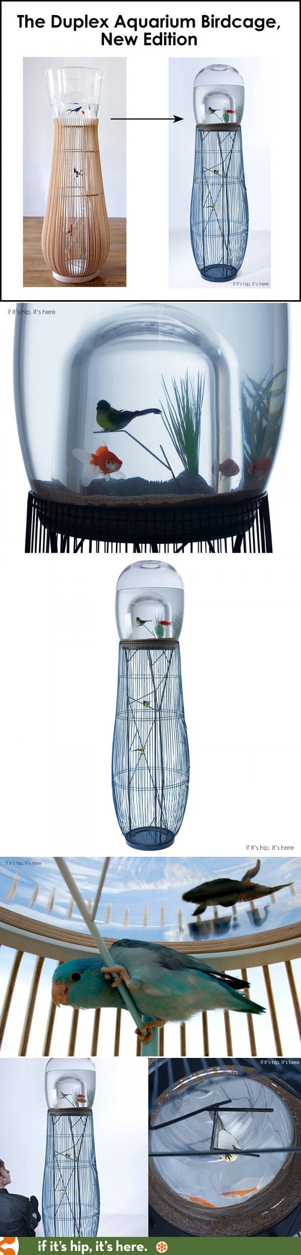 The Duplex Version 2 is a combination birdcage fish tank now available in signed, limited editions. | http://www.ifitshipitshere.com/duplex-aquarium-combo-birdcage-new-edition/