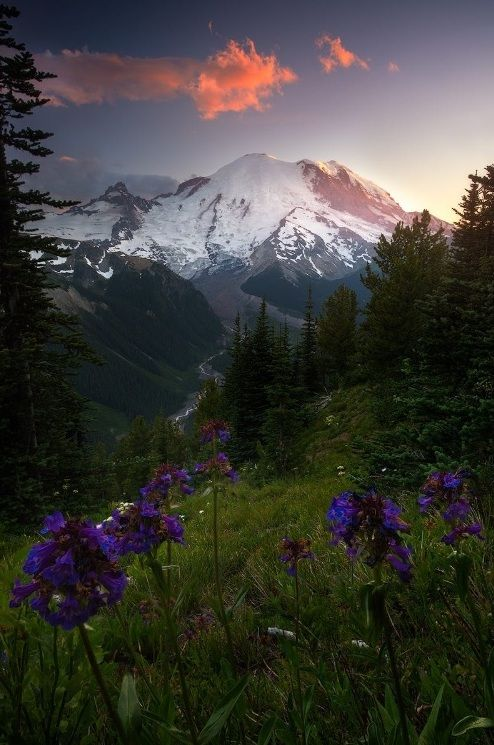 Ponderation — sweetd3lights:     ByMatt Meisenheimer