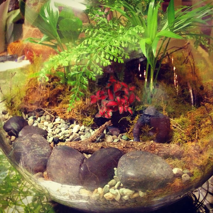 """""""Gorilla in the mist"""" a terrarium we made for the shop yesterday"""