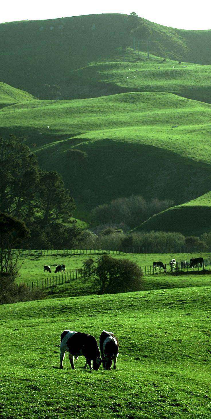 Near Hamilton, Waikato rural landscape, NZ.