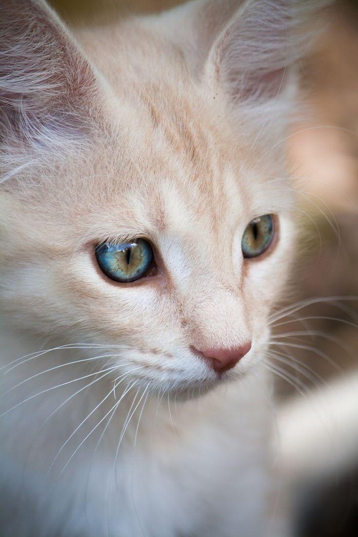 Cat - gorgeous image