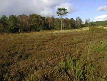 MHLW; The Glen, heathland