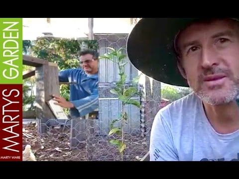 Matts Vision for the Permaculture Chicken Coop Part 4 https://www.youtube.com/martysgarden I wanted to share with you the vision from the builder of our new ...