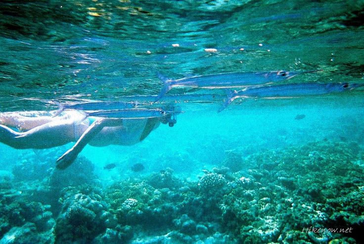 Maldives - Snorkeling in Maldives