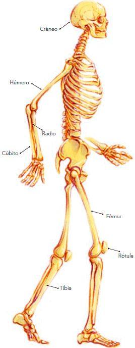 Mis Actividades de Primaria: Movimientos del cuerpo y prevención de lesiones, Bloque 1, Tema 1, Ciencias Naturales, Tercer Grado.