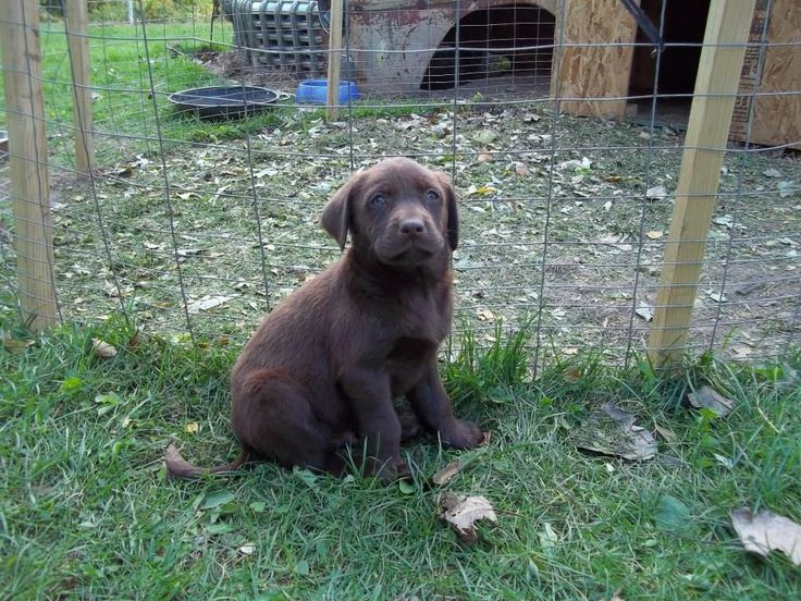 24 Best Hunting Outdoor Dogs Images On Pinterest Outdoor Dog