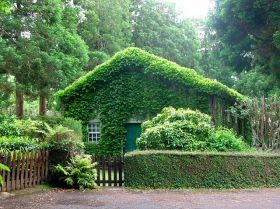 House covered with vines in the Azores, Portugal – You can hire a gardener in Portugal in different ways. You may get a full time gardener, 8 hours a day and 5 days a week, or you can have them come over to your house on a monthly basis. The minimum wage for a full time a gardener is US $432 (£287) to $649 (£431) a month. If you are hiring a full time gardener, you have to pay for their Social Security and other benefits.
