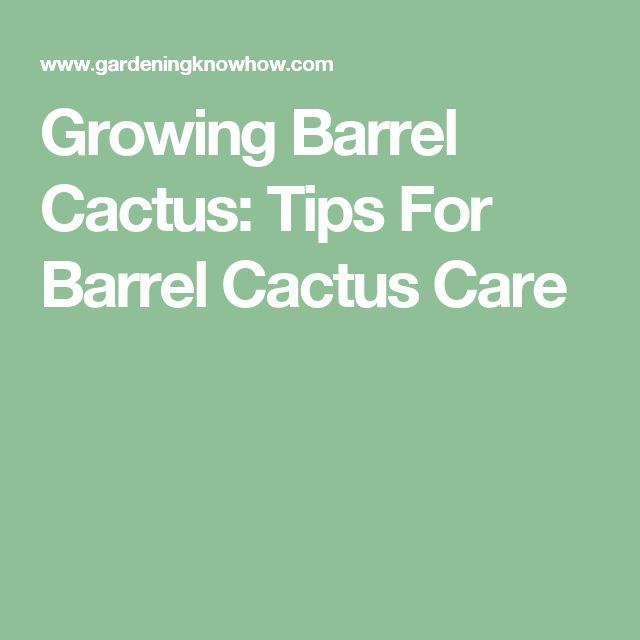Growing Barrel Cactus: Tips For Barrel Cactus Care