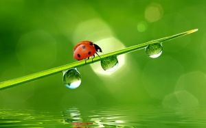 Preview wallpaper beetle, grass, drops, water 3840x2400