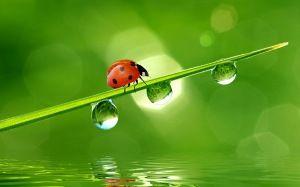 Preview wallpaper beetle, grass, drops, water 3840x2400