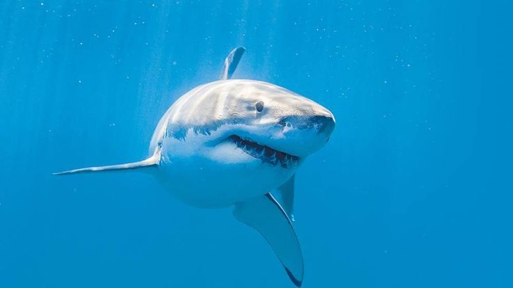 WA Fisheries Minister Joe Francis wants federal help with shark research