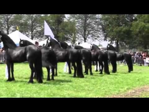 Friesian Horse ~ This is an AMAZING video. You wont close your mouth the whole time you watch! AWESOME!!!