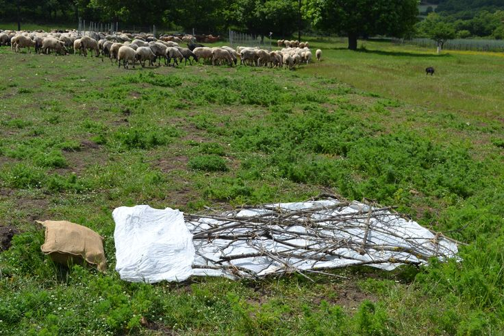 """Kaziale Stavroula """"The Meadow (Livadi) of the ephemeral"""" Artwork in situ (in the field), which remained as a landscape installation to be eventually fully absorbed by nature."""
