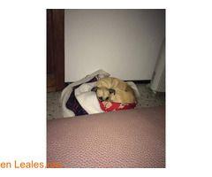 Cleo  #Perdido #Encontrado #sebusca #extraviado #LealesOrg  Contacto y info: Pulsar la foto o: https://leales.org/perdidos-o-encontrados/perros-perdidos/cleo_i2637 ℹ  Hola amigos  se me ha perdido Cleo en zona Tafira Baja... si alguien la ve avisen o compartan esta publicación por favor ... es la perrita canelita... gracias Contacto Facebook https://www.facebook.com/sandra.g.betancor   Acerca de esta publicación:   Esta publicación NO ha sido creada por Leales.org y NO somos responsables de…
