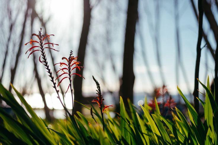 #flor #flores #fiore #fiori #fleur #flowerpop #orchidee #floralstyles_gf #jardim #phalaenopsis #flora #orchid #macro_flower #orchidea #flom #orchids #flos #phalaenopsisorchid #petals #jardin #bunga #flowersofinstagram #petal #plant #blume #flowermagic #flowerporn #flower #blossom #verde