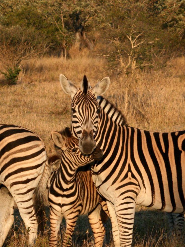 Morning cuddle on safari
