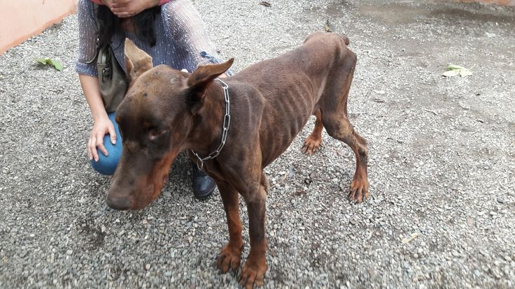 Close kennel 'Paradise' in Alhaurin dela Torre per animal suspected abuse.