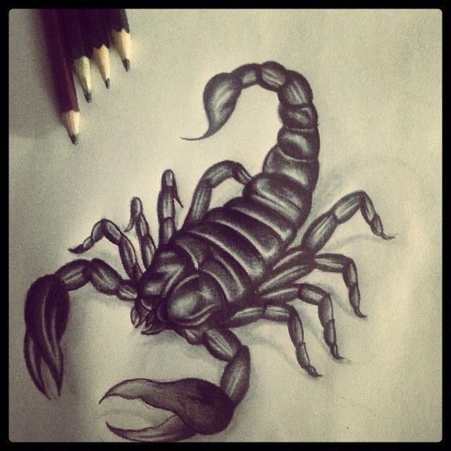 Estudo escorpião #hathox #tattoo #sketch #desenho #wip #estudo #escorpião #drawing #scorpion