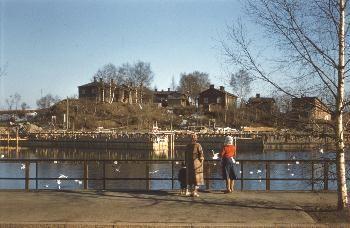 Ratinanniemen puutaloja kuvattuna Nalkalasta. Kuva otettu 1960-luvulla.