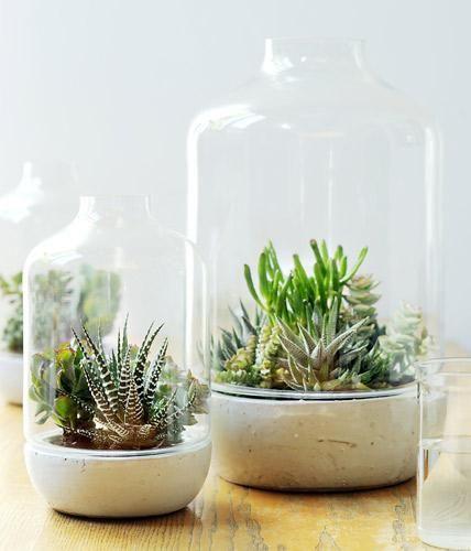 Die Verbindung von Glas und Pflanzen ist ein schöner Blickfang. Die Glashauben schützen die Pflanzen nicht nur an zügigen Plätzen vor einer Erkältung,...