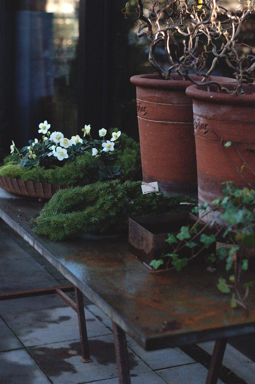 Victoria Skoglund   En trädgårdsmästares väg