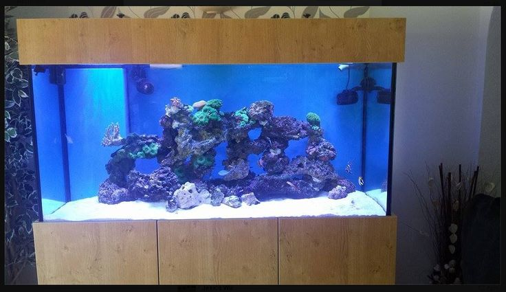 116 Best Prime Aquariums Your Custom Fish Tank