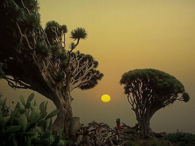 La Palma. Canary Islands. Spain