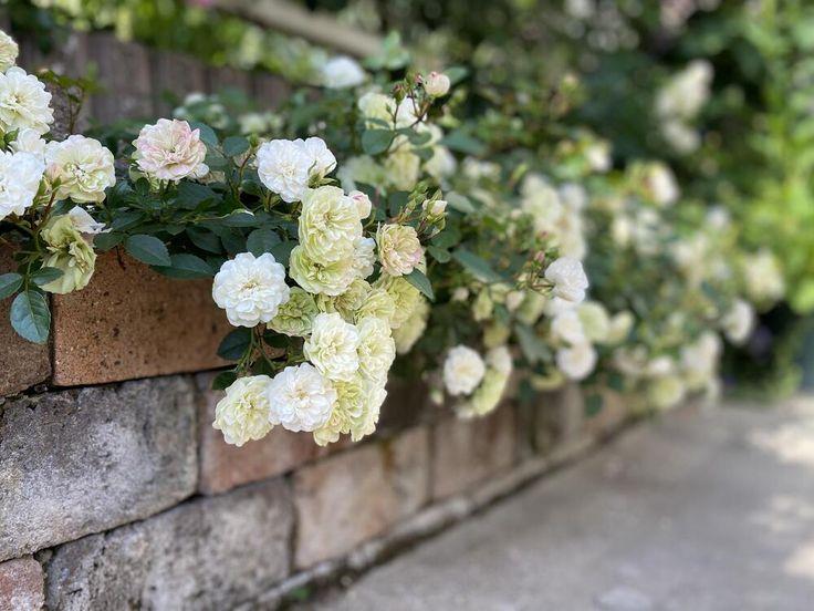 季節の花と実 庭 花壇 庭 づくり