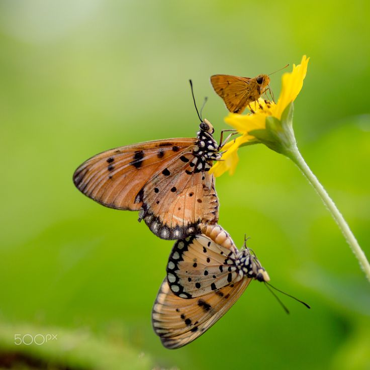 Enjoy Today - Group of butterfly